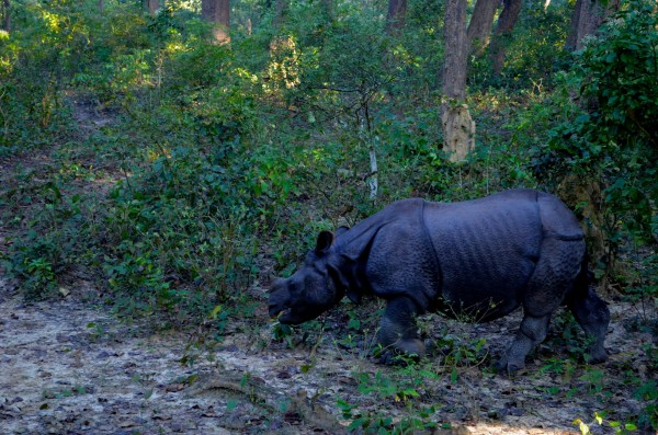 The Rhino we sighted...